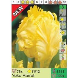 Тюльпаны Yoko Parrot (x100) 11/12 (цена за шт.)