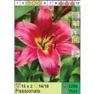 Лилии Passionale (x30) 16/18 (цена за шт.)