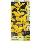 Ирисы ретикулята Danfordiae (x100) 5/6 (цена за шт.)