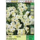 Нарциссы Avalanche (x50) 13/14 (цена за шт.)