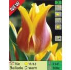 Тюльпаны Ballade Dream (x100) 11/12 (цена за шт.)
