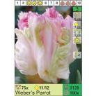 Тюльпаны Weber's Parrot (x100) 11/12 (цена за шт.)