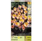Крокус ботанический Advance (x200) 5/7 (цена за шт.)