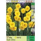 Нарциссы Sun Disc (x100) 10/12 (цена за шт.)