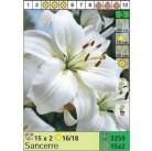 Лилии Sancerre (x30) 16/18 (цена за шт.)