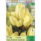 Тюльпаны Hans Dietrich Gencher (x100) 11/12 (цена за шт.)