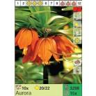 Рябчик Aurora (x15) 20/22 (цена за шт.)