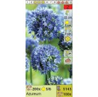 Лук Azureum (x100) 5/+ (цена за шт.)