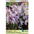 Хионодокса Rosea (x150) 5/7 (цена за шт.)
