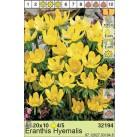 Весенник Hyemalis (x200) 4/5 (цена за шт.)