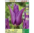 Тюльпаны Purple Dream (x100) 11/12 (цена за шт.)