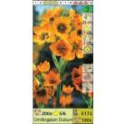 Птицемлечник Dubium (x200) 5/6 (цена за шт.)