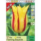 Тюльпаны Flaming Bayside (x100) 11/12 (цена за шт.)