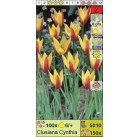 Тюльпаны ботанические Clusiana Cynthia (x150) 6/+ (цена за шт.)