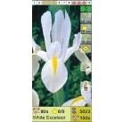 Ирисы датские White Excelsior (x150) 8/9 (цена за шт.)