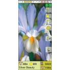 Ирисы датские Silver Beauty (x150) 8/9 (цена за шт.)