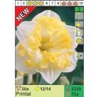 Нарциссы Printal (x75) 12/14 (цена за шт.)