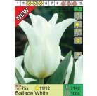 Тюльпаны Ballade White (x100) 11/12 (цена за шт.)