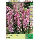 Гиацинтоидос Pink (x100) 7/8 (цена за шт.)