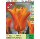Тюльпаны Ballade Orange (x100) 11/12 (цена за шт.)