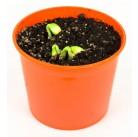 """Кабачок """"Азбука растений"""" набор для выращивания BONTILAND (горшочек, питательный субстрат, семена, пластиковая лопатка для рыхления)"""