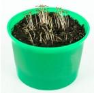 """Портулак овощной """"Зелень круглый год"""" набор для выращивания BONTILAND (горшочек с крышкой, питательный субстрат, дренаж, семена)"""