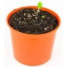 """Огурец """"Азбука растений"""" набор для выращивания BONTILAND (горшочек, питательный субстрат, семена, пластиковая лопатка для рыхления)"""