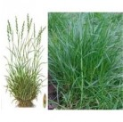 """Семена """"Райграсс пастбищный GREENFIELD ONE"""" 20 кг"""