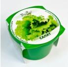 """Салат """"Зелень круглый год"""" набор для выращивания BONTILAND (горшочек с крышкой, питательный субстрат, дренаж, семена)"""
