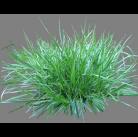 """Семена газонной травы """"Декоративный газон для засоленных почв"""" 20кг"""