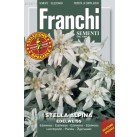 Стелла альпийская (0,3 гр) DBFS 128/10   Franchi Sementi