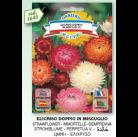 Хризантема Сarinato tricolor mix семена DB
