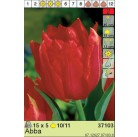Тюльпаны Abba (x5) 10/11 (цена за упаковку)