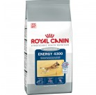 Сухой корм Royal Canin Energy 4300 17kg