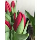 Тюльпаны Passoa