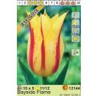 Тюльпаны  Bayside Flame (x5) 11/12 (цена за шт.)