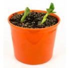 """Бобы """"Азбука растений"""" набор для выращивания BONTILAND (горшочек, питательный субстрат, семена, пластиковая лопатка для рыхления)"""