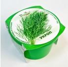"""Укроп """"Зелень круглый год"""" набор для выращивания BONTILAND (горшочек с крышкой, питательный субстрат, дренаж, семена)"""