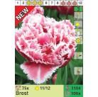 Тюльпаны Brest (x100) 11/12 (цена за шт.)