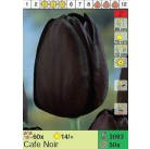 Тюльпаны Cafe Noir (x50) 14/+ (цена за шт.)