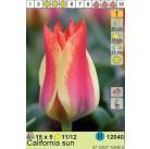 Тюльпаны  California Sun (x5) 11/12 (цена за шт.)