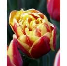 Тюльпаны Close Up