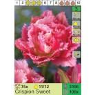 Тюльпаны Crispion Sweet (x100) 11/12 (цена за шт.)