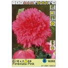 Бегония Fimbriata Pink 5/6