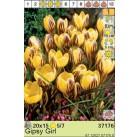 Крокусы Gipsy Girl (x15) 5/7 (цена за упаковку)