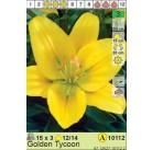 Лилии  Golden Tycoon (x3) 12/14 (цена за шт.)