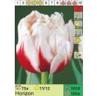 Тюльпаны Horizon (x100) 11/12 (цена за шт.)