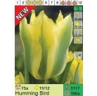 Тюльпаны Humming Bird (x100) 11/12 (цена за шт.)