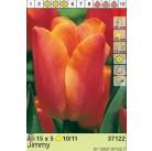 Тюльпаны Jimmy (x5) 10/11 (цена за упаковку)