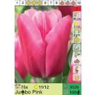Тюльпаны Jumbo Pink (x100) 11/12 (цена за шт.)